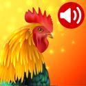 Animals: Ringtones APK Download