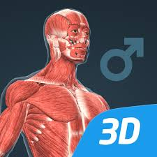 Human body (male) educational VR 3D APK Download